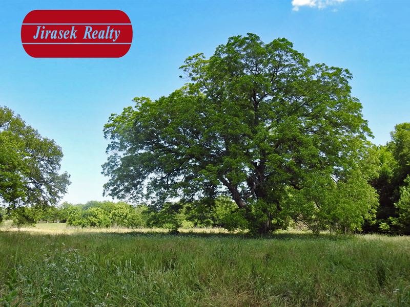 11.1+- Ac, Creek Rd, Troy Isd : Temple : Bell County : Texas