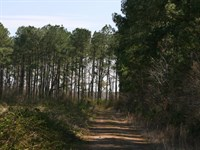 Weyco 8 : Corapeake : Gates County : North Carolina