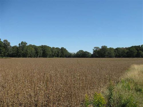 96 Acres Farmland And Hunting LA : Colt : Saint Francis County : Arkansas