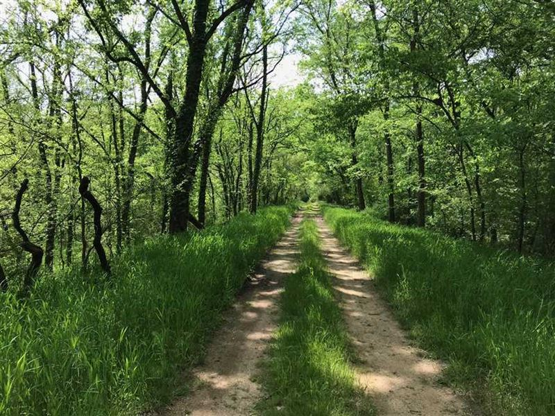 323 Acre Tract Available in Maury : Columbia : Maury County : Tennessee
