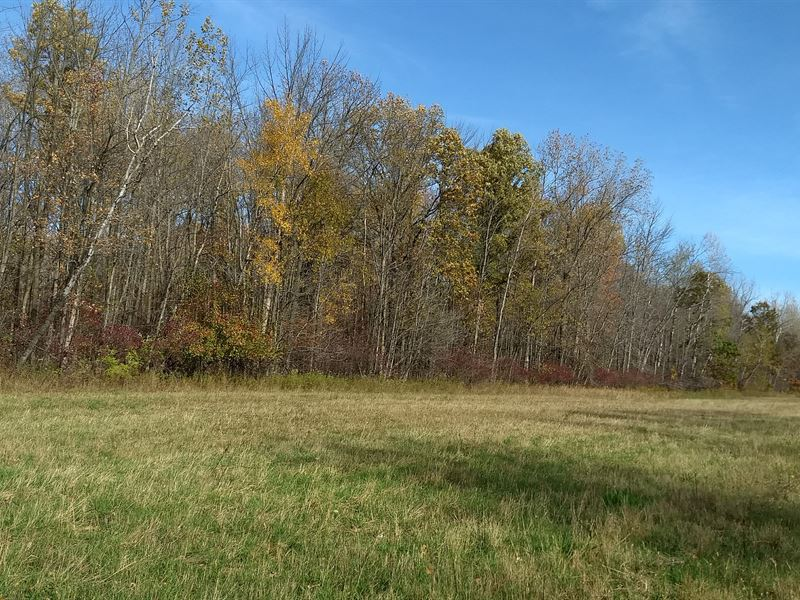 Wooded Acreage For Nature Lovers : Pinconning : Bay County : Michigan