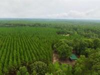 Big Buck Plantation In Turner Co : Ashburn : Turner County : Georgia
