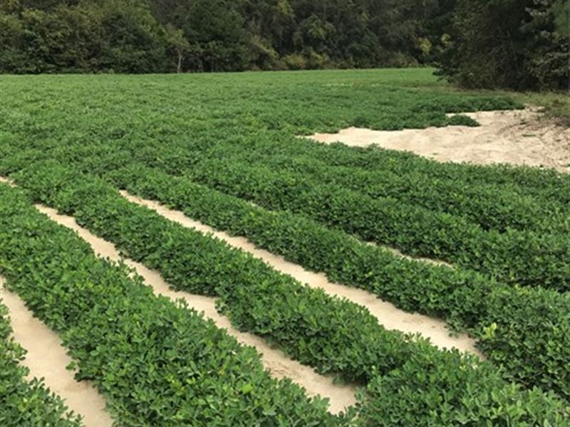 Beautiful Farm Tract : Columbia : Houston County : Alabama