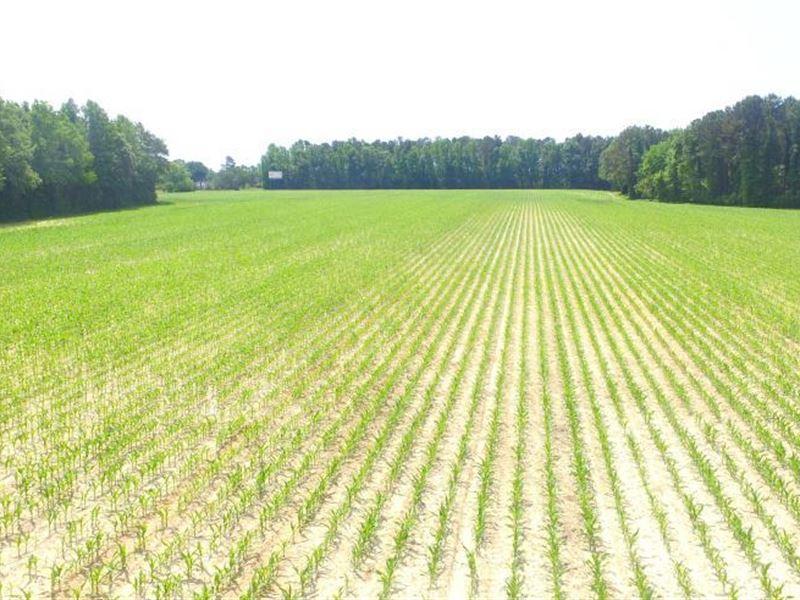 Whiteville Farm And Timber Land Wit : Whiteville : Columbus County : North Carolina