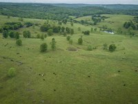 Rotational Grazing Cattle Farm in : Wasola : Ozark County : Missouri