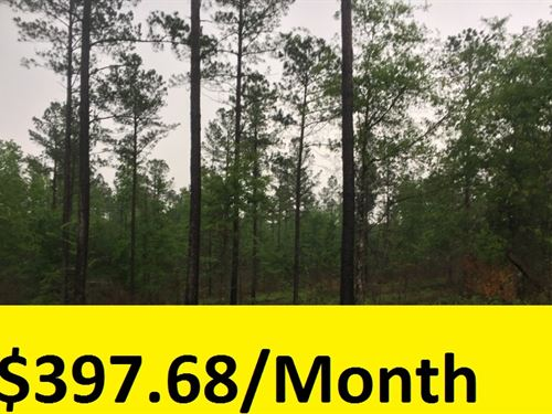 Large Private Wooded Lot : Hep : Burke County : Georgia