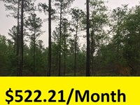 Wooded Homesite Or Rec Tract : Hep : Burke County : Georgia