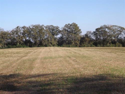 Beautiful Land With Creek : Shorterville : Henry County : Alabama