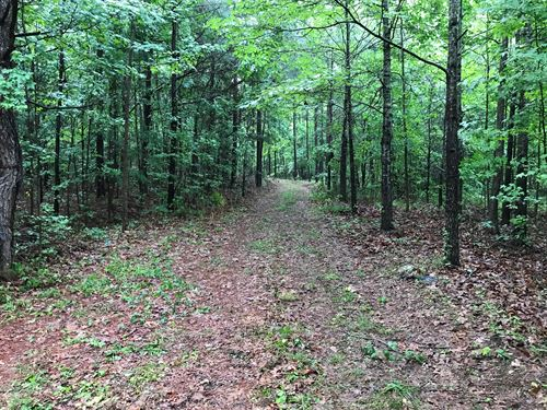 High Volume Timber Tract Coosa CO : Parkdale : Coosa County : Alabama