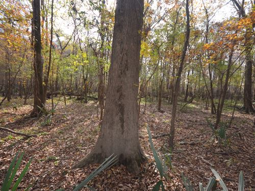 5-005 New Bryant's Upper Landing : Stockton : Baldwin County : Alabama