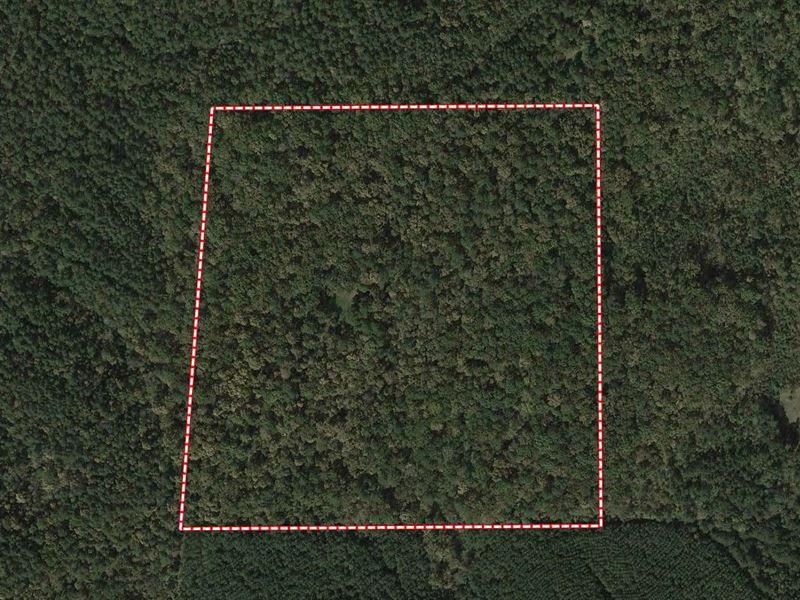 40 Acre Timber Tract : Ragland : Saint Clair County : Alabama