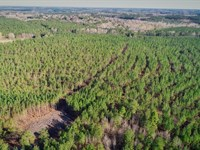 Ck2421 Timberland Tract : Promised Land : Greenwood County : South Carolina