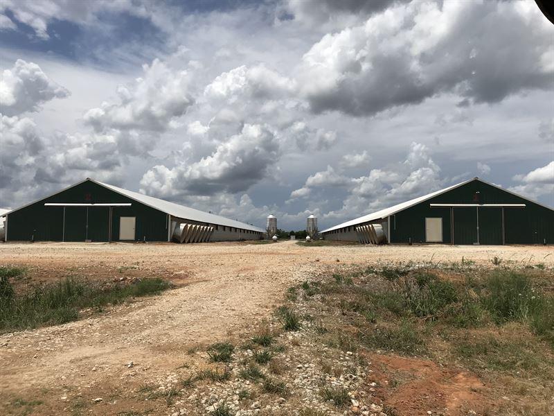 Huge Broiler Farm In Texas : Crockett : Houston County : Texas
