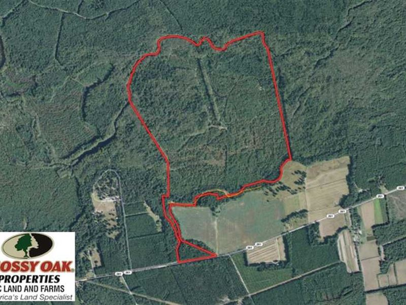 320 Acres of Hunting And Recreatio : Greeleyville : Clarendon County : South Carolina