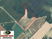 35 Acres of Farm And Timber Land : Bishopville : Lee County : South Carolina