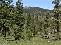 245 Acres Recreational Timberland : Heppner : Morrow County : Oregon