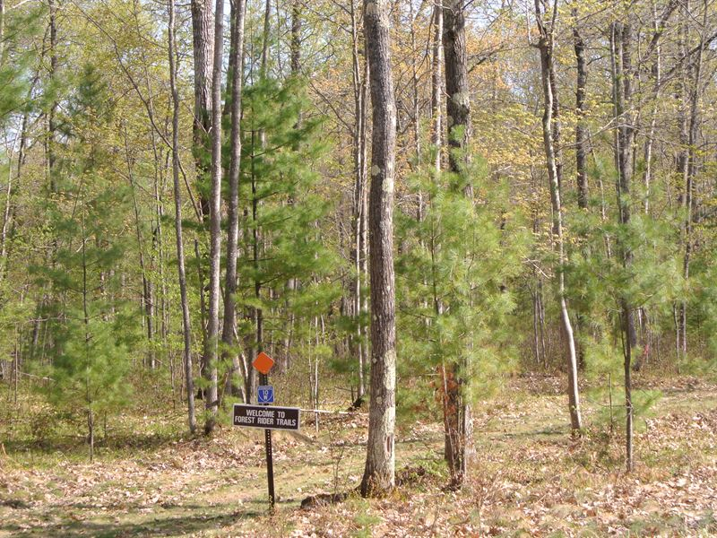 Wooded Uplands In Wi Northwoods : Minocqua : Oneida County : Wisconsin