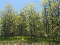 Hunting Land Near Lake Ontario : Sterling : Cayuga County : New York