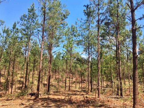 Small Acreage For Sale Amite County : Gloster : Amite County : Mississippi
