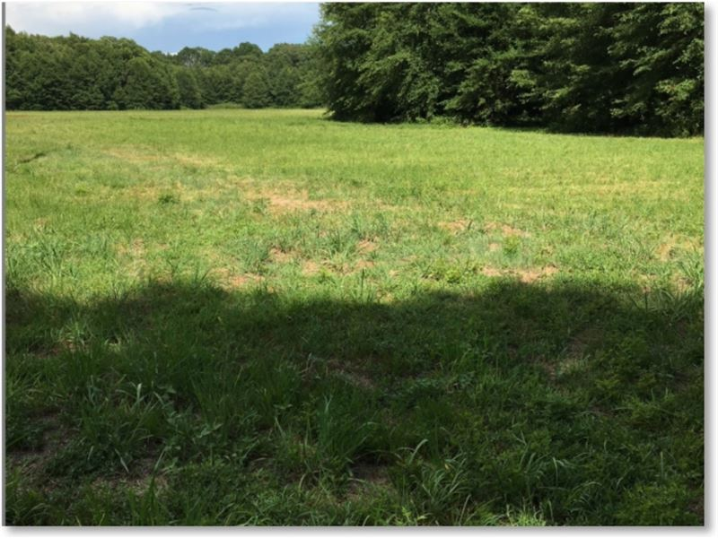 36.2 Acres In Scott County : Pelahatchie : Scott County : Mississippi
