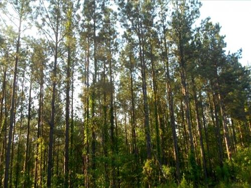 190 Acres In Yalobusha County In Oa : Tillatoba : Yalobusha County : Mississippi