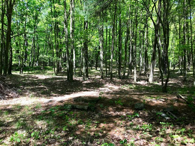 6.5 Acre Wooded Lot : Stillwater : Luzerne County : Pennsylvania