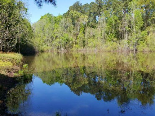 Pond With Beautiful Mature Timber : Fort Valley : Peach County : Georgia