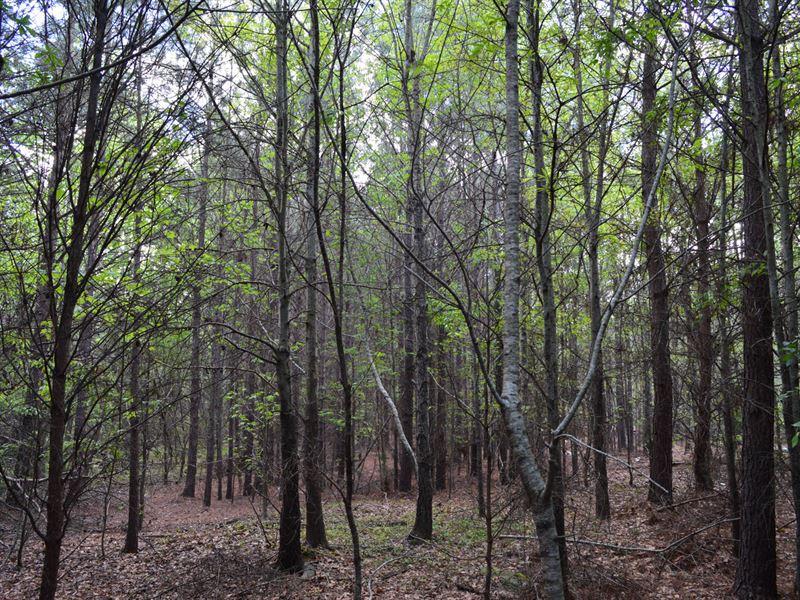 33 Acres Near Hwy 101 & Us 221 : Woodruff : Spartanburg County : South Carolina