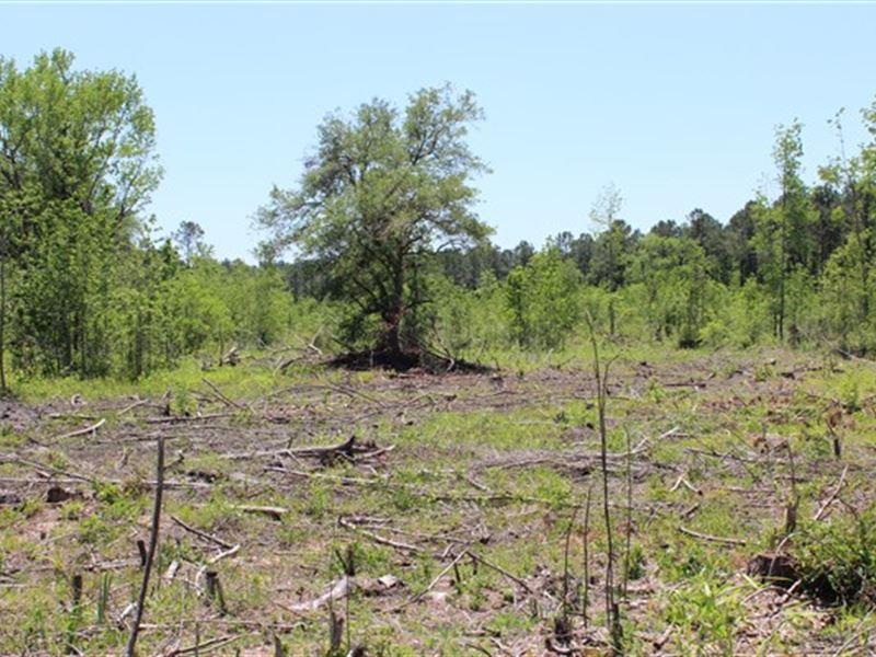 20.3 Acres - Williamsburg Co, Sc : Salters : Williamsburg County : South Carolina