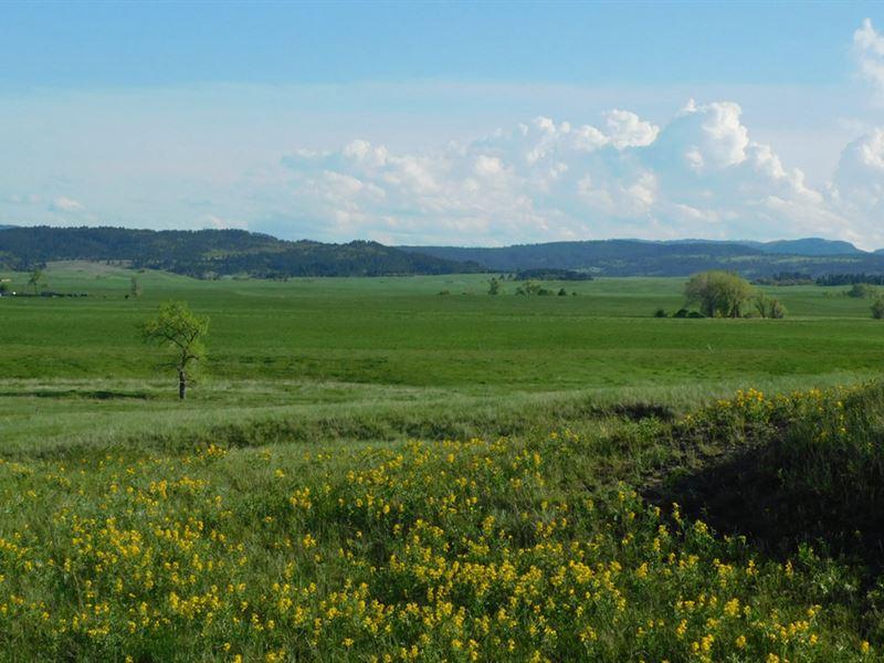 Andersen 80 Acres : Sturgis : Meade County : South Dakota