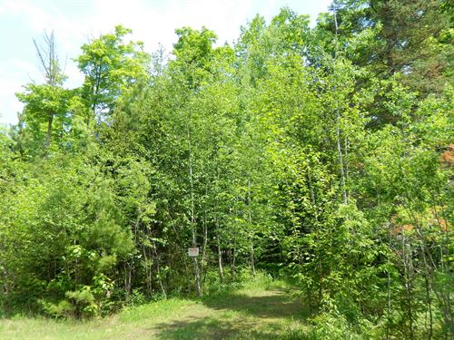 Buildable Vacant Land : Ojibwa : Sawyer County : Wisconsin