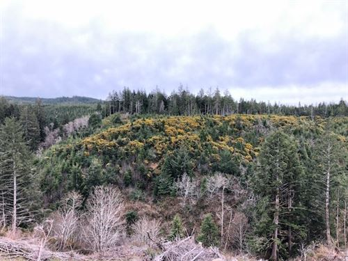 Twomile Creek : Bandon : Coos County : Oregon