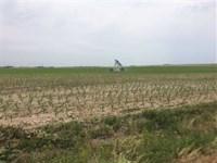 Irrigated Farm Lakin, Kearny Coun : Lakin : Kearny County : Kansas