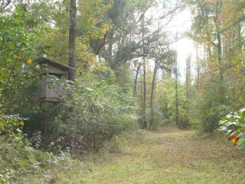 50 Acres Hunting & Timber Lan : Picayune : Pearl River County : Mississippi