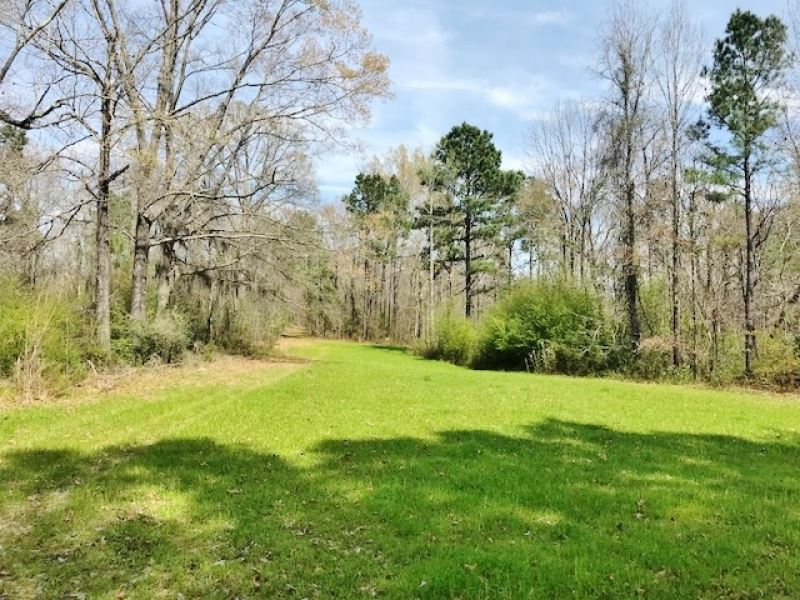 240 Acres Hardwood Timberland Hunti : Fayette : Jefferson County : Mississippi