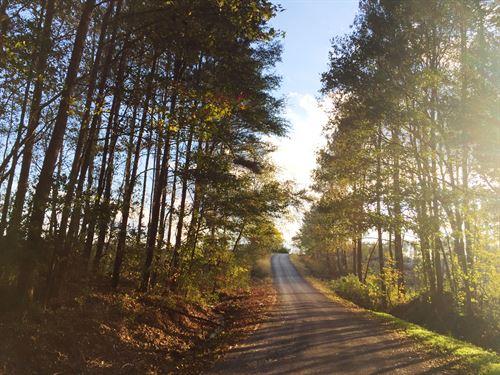 Pennington Circle North : Nauvoo : Walker County : Alabama