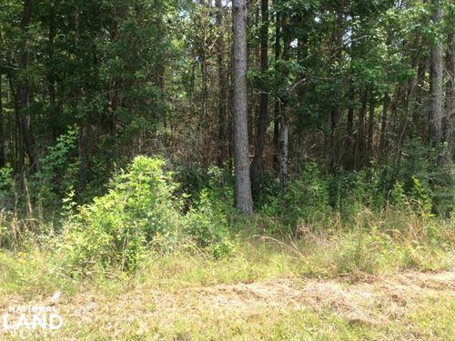 Lumberton Timber Tract : Lumberton : Lamar County : Mississippi