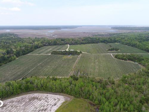 Coastal Blueberry Farm : Townsend : McIntosh County : Georgia