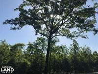 Alvin Mini Farm Home Site : Alvin : Berkeley County : South Carolina