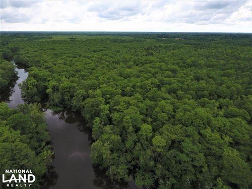 Ipock Timber Tract : Vanceboro : Lenoir County : North Carolina