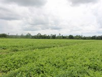 Rare Farm Purchase Opportunity : Tifton : Tift County : Georgia