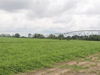 Rare Farm Sale In Area : Tifton : Tift County : Georgia