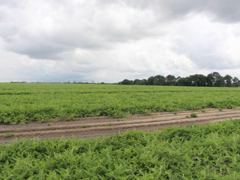 Prime Farmland, Rare Opportunity : Tifton : Tift County : Georgia