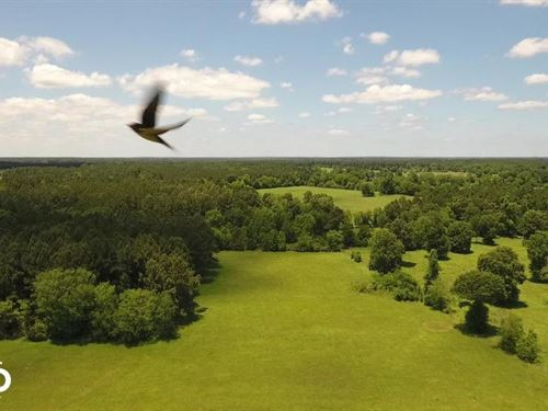 35 Acre Homesite/Recreational Tract : Kennard : Trinity County : Texas