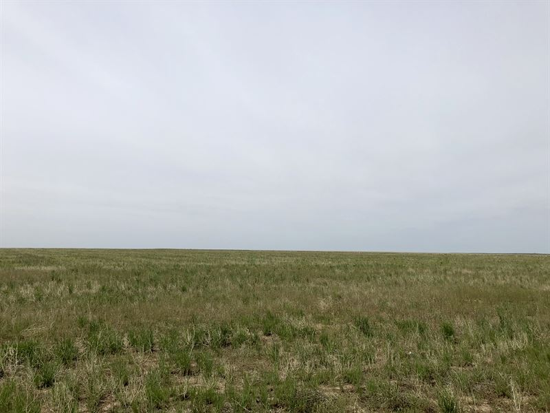 Thayer Ranch 180 : Agate : Elbert County : Colorado