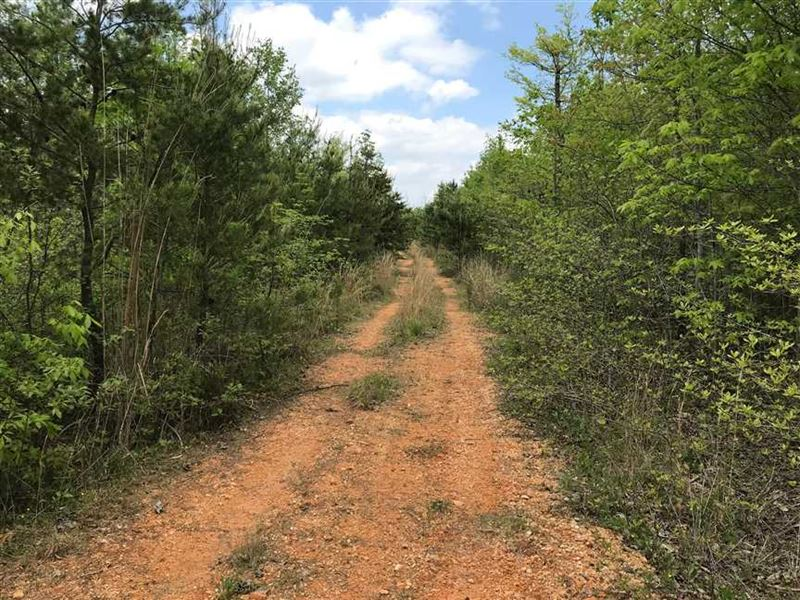 209.66 Acres of Prime Recreational : Hohenwald : Lewis County : Tennessee