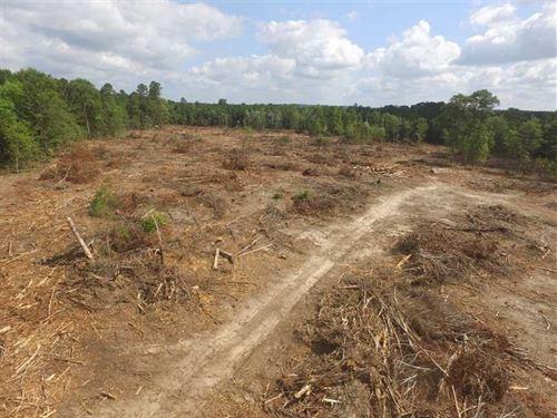 24.5 Acres in Jasper County, Ready : Jasper : Texas