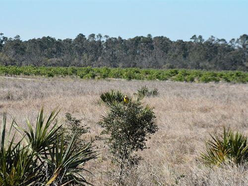 Highlands County Agricultural Land : Lake Placid : Highlands County : Florida