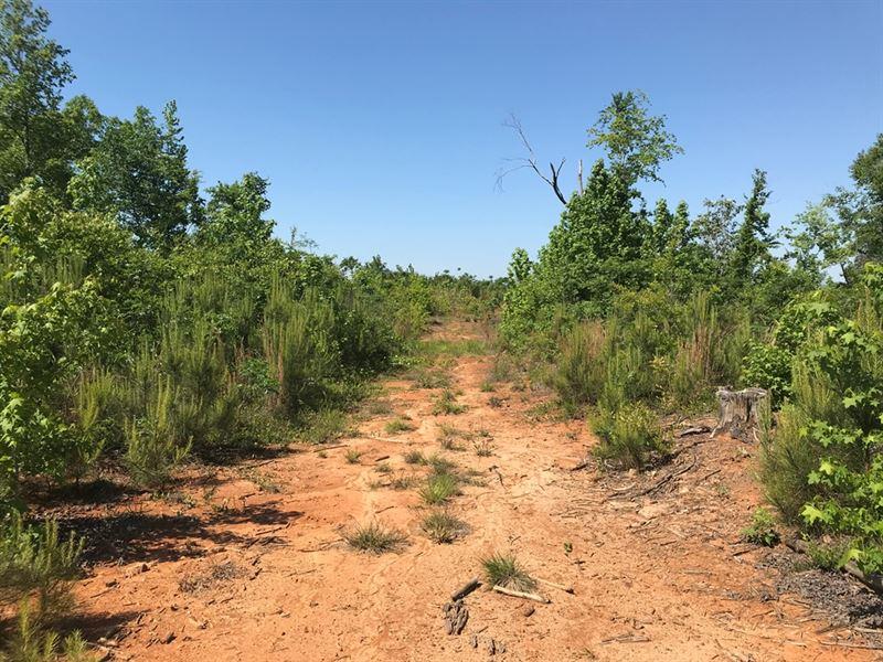 66-091 Anne Manie Tract : Annemanie : Wilcox County : Alabama
