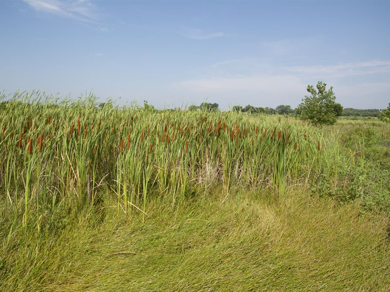 Wetlands & Wildlife : Silver Lake : Shawnee County : Kansas